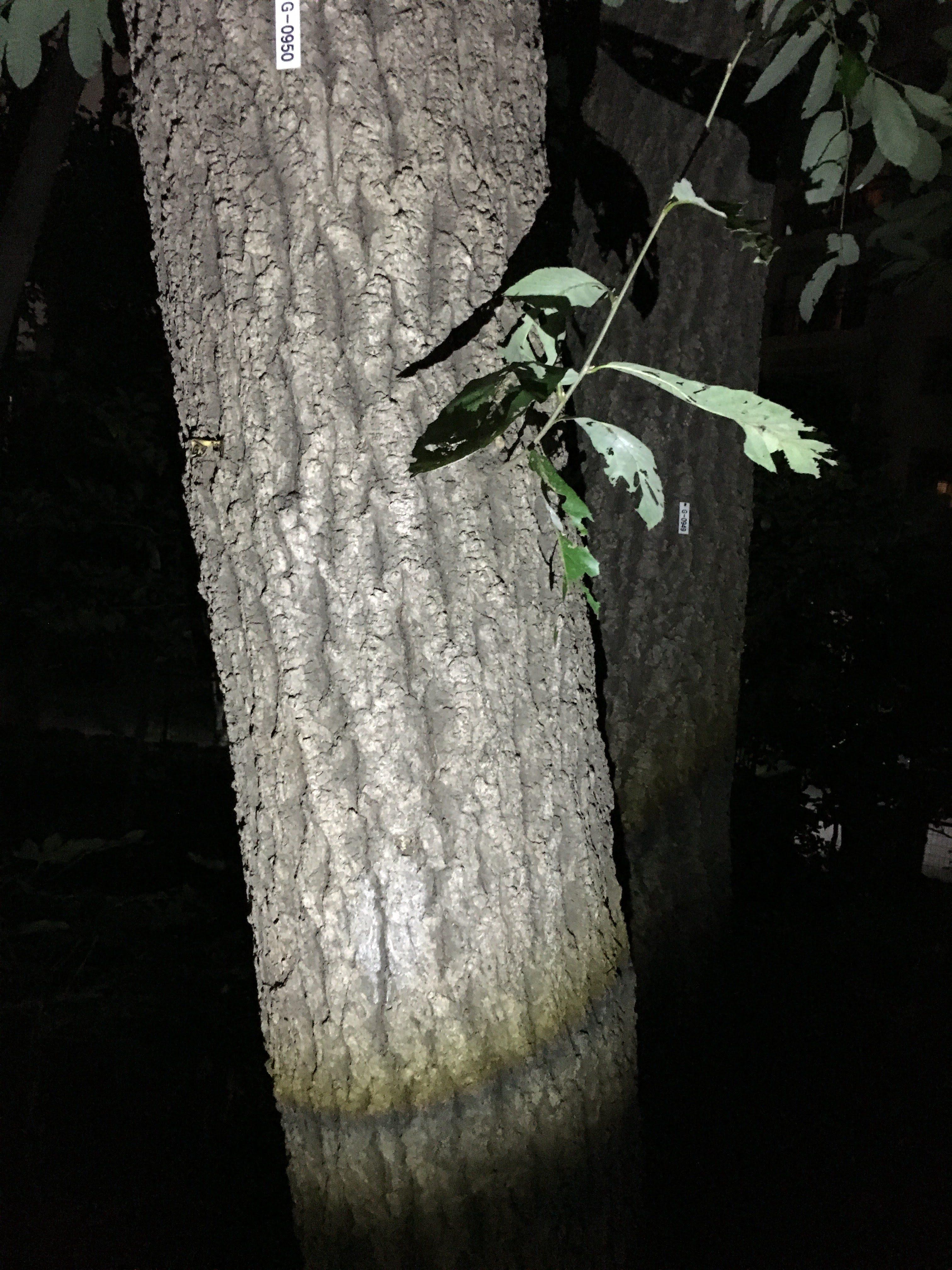 林試の森公園-クヌギエリア