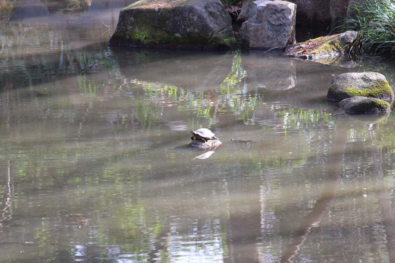 林試の森公園亀