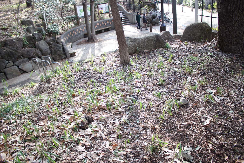 林試の森公園クヌギ