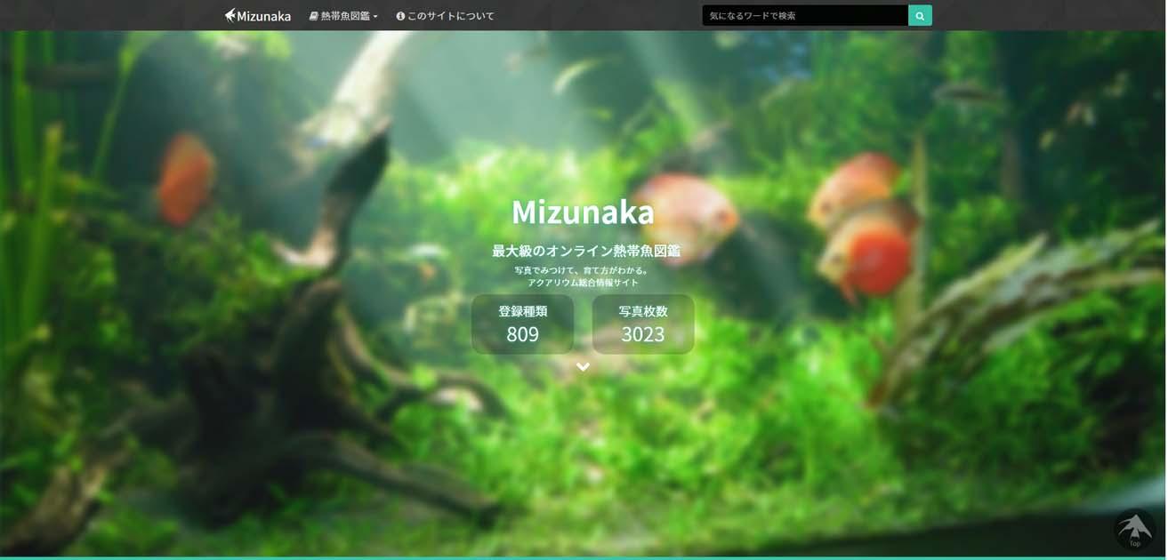熱帯魚図鑑-Mizunaka