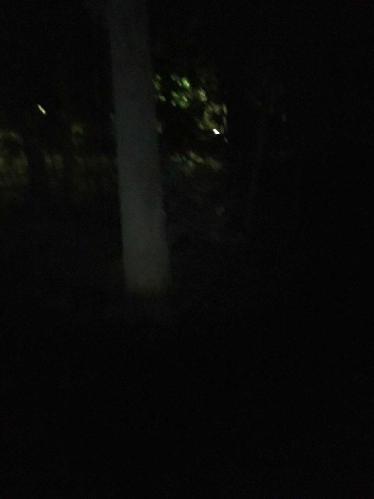 クヌギエリアは真っ暗