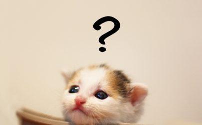 サバゲー未経験者のよくある疑問ランキング【解決】