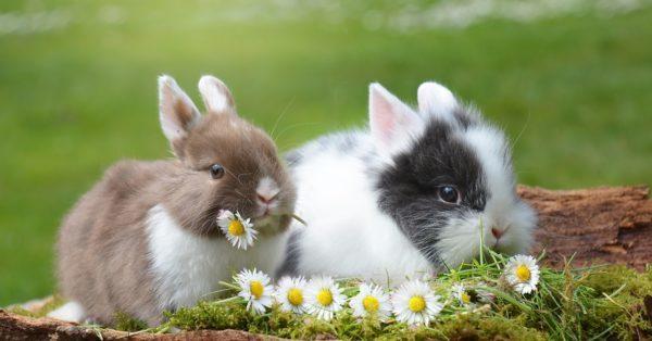 ウサギは臭い?ニオイの原因と対策方法を解説!
